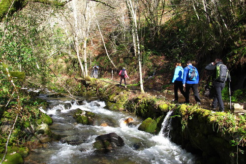 Citas para fotografiar el otoño: el bosque de Muniellos en Asturias