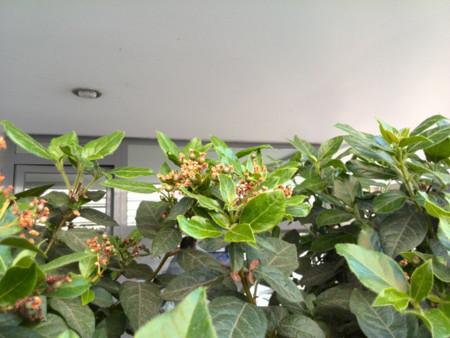 flores p6