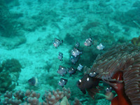 Bucear en Zanzíbar, una inolvidable experiencia. Zanzibar (III)