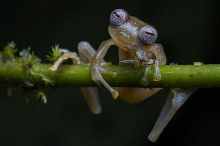 R Jaime Culebras Wildlife Photographer Of The Year