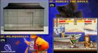 La última moda en Twitch, peces jugando a videojuegos