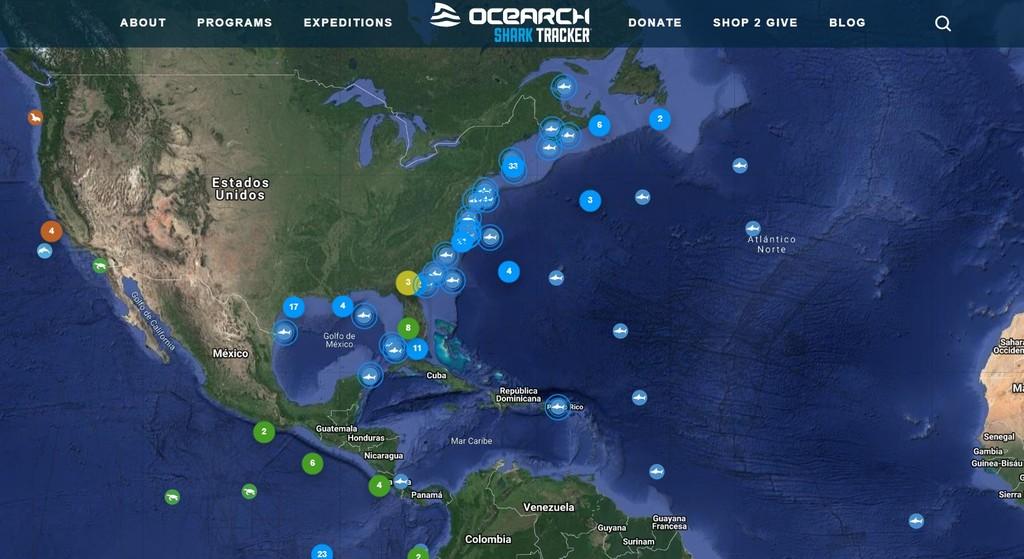 Sigue la pista en tiempo real de tiburones, delfines, ballenas y otros animales marinos con esta herramienta