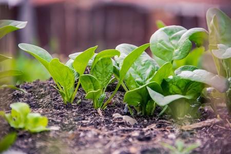 Beneficios De Espinaca Tu Salud Verduras Saludable Vegano