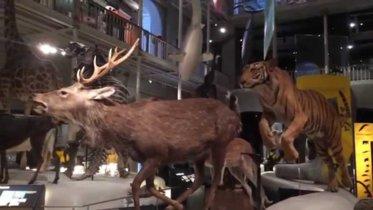 Recorrido por el Museo Nacional de Escocia, el museo más divertido de Edimburgo