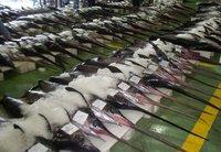 Metales pesados en el atún y el pez espada. Sanidad desaconseja su consumo
