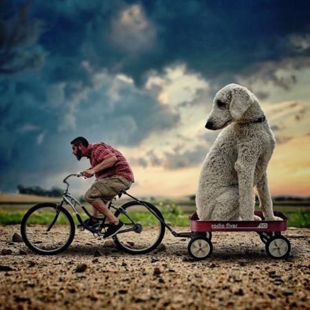 Las fantásticas aventuras de Christopher y su perro gigante... ¿Perro gigante?