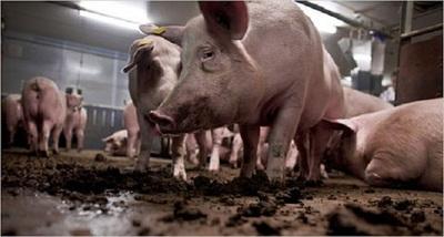 La USDA patenta un método que reduce las emisiones de Amoníaco al suelo