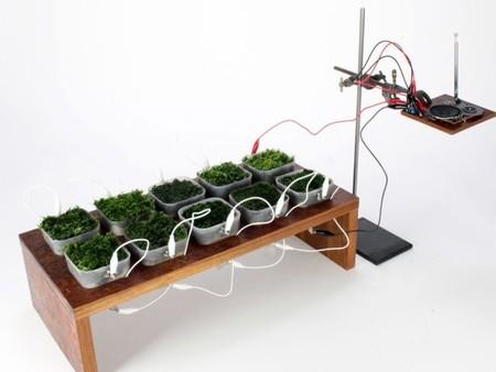 [Vídeo] Plantas como fuente de energía para alimentar una radio