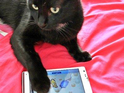 5 juegos y otras aplicaciones que harán las delicias de tu gato