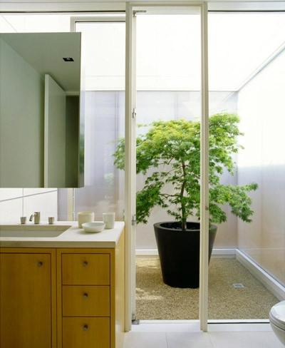 Baño con una gran planta