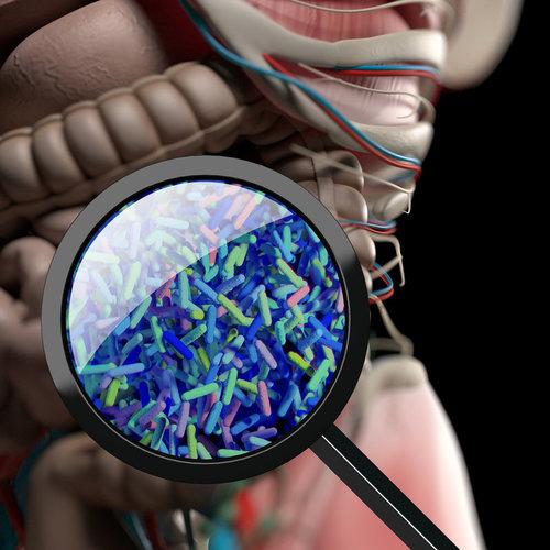 El secreto contra el envejecimiento podria estar en las bacterias de tu intestino