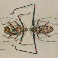 Las mejores ilustraciones de ciencia en el Il.lustraciència