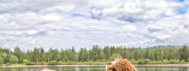 La conmovedora historia entre un niño adoptado y su inseparable perro Labradoodle que parecen hermanos