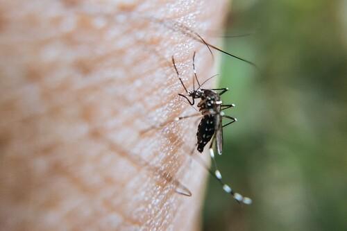 El mejor spray antimosquitos según los comentaristas de Amazon