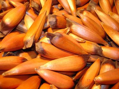 El piñón, un tesoro de la dieta mediterránea