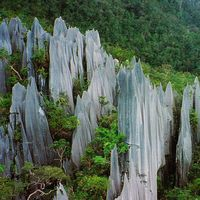 Los pináculos de Gunung Mulu: estas aserradas cuchillas de piedra caliza se encuentran en las selvas de Borneo