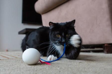 [Inocentada 2015] Un huevo con plumas pondrá a prueba la inteligencia de tu gato
