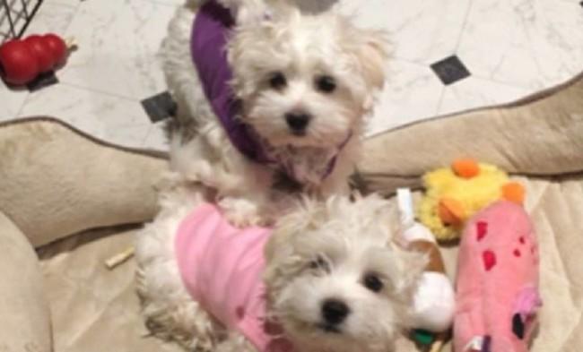 Los Perros Clones De Streisand