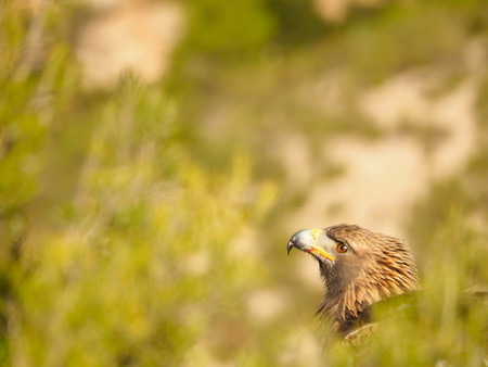 'Young Nature Photographers', una nueva plataforma internacional para reunir a jóvenes fotógrafos de naturaleza
