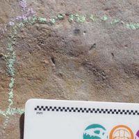El origen de casi todos los animales que conocemos podría estar en este gusano que vivió hace 555 millones de años