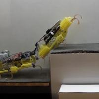 Aunque parezcan cucarachas, la ventaja de estos robots es su capacidad de cooperación