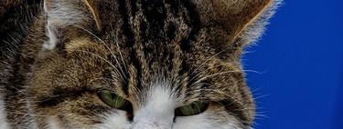 La ciencia sigue sin tener ni idea sobre si los gatos nos aman o nos odian. Ergo nos odian