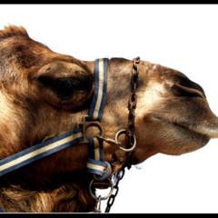 Foto 1 de 5 de la galería animales en Xataka Foto