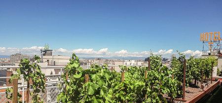 ¿Se puede cultivar un viñedo en las alturas? Sí, en Madrid hay uno y te desvelamos su secreto