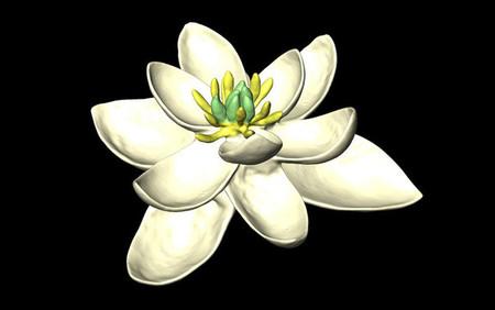 Así eran las flores hace millones de años
