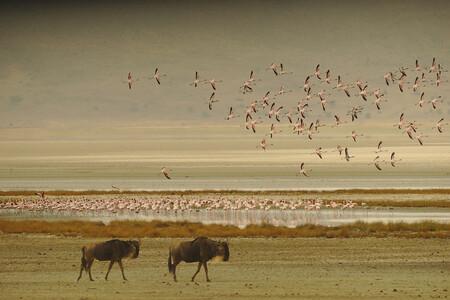 Fauna Lago Manyara