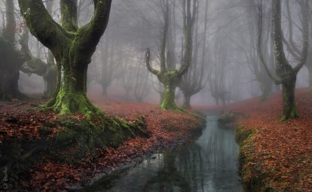 Beautiful Mysterious Forests 221 880