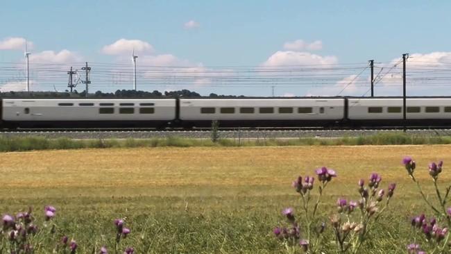 Tren Turistico Zorrilla