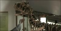 Argentinos descubren nueva especie de dinosaurio en la Patagonia