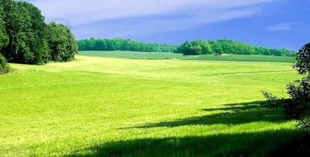 paisaje campo