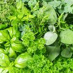 Cinco hierbas aromáticas para cultivar en verano y recetas para aprovecharlas en el picoteo del finde
