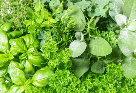 Hierbas aromáticas: cinco variedades para cultivar y recetas para ...