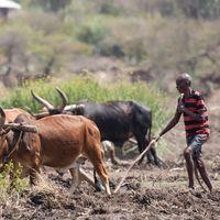 Los países en desarrollo se endeudan y puede llevarles a consecuencias fatales