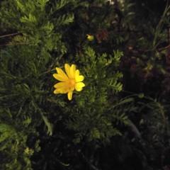 Foto 11 de 12 de la galería lg-g4-1 en Xataka