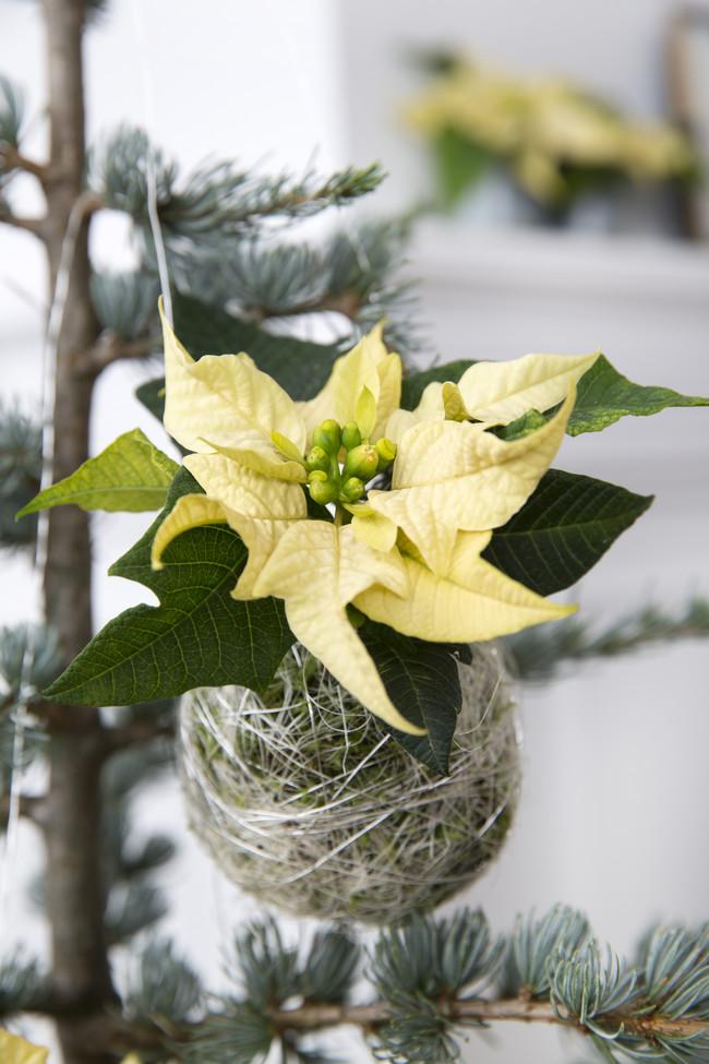 2016 Poinsettia Diy Adorno Arbol Navidad 06 Es