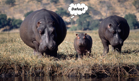 No, ningún hipopótamo ha dejado hospitalizados a tres ancianos con un pedo en Cabárceno