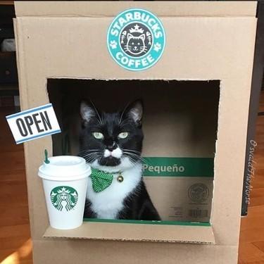 Los felinos influencers recomendados por nuestros seguidores son la mejor excusa para celebrar el día internacional del gato
