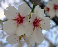 Diez imprescindibles para la Primavera 2011 (II)