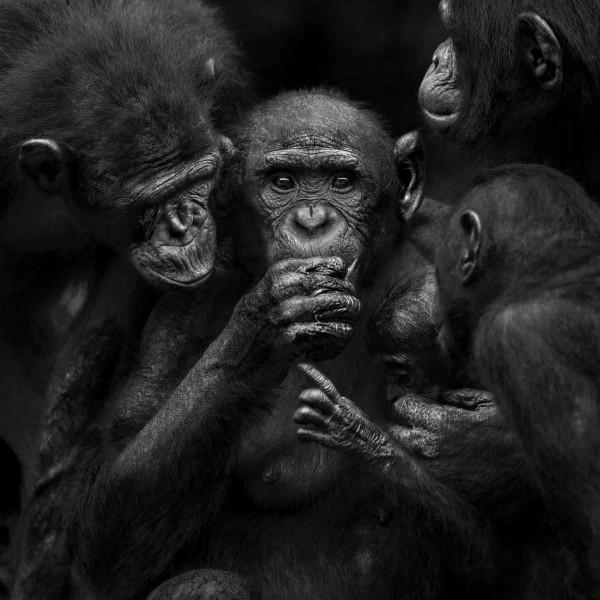 """Isabel Muñoz fotografía nuestros antepasados en """"Álbum de Familia"""", un estudio alrededor de los primates"""