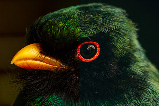Cómo conseguir el look de 'película de color subrevelada' en Photoshop