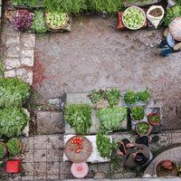 """El crecimiento de la dieta """"flexiteriana"""": cuando se pone de moda elegir alimentos que recuerdan a la dieta mediterránea"""