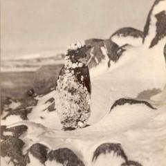 Foto 18 de 18 de la galería las-primeras-fotografias-de-la-antartida en Xataka Foto