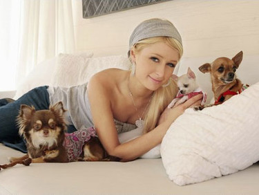 Paris Hilton se echa un cerdo de mascota