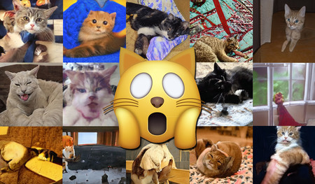'Este gato no existe': a la inteligencia artificial le cuesta más generar animales que humanos