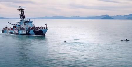'Mar de sombras': este documental producido por Leonardo DiCaprio es un llamado para salvar a la vaquita marina en México