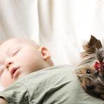 Qué tener en cuenta si quieres hacer colecho y tu perro duerme en la misma cama